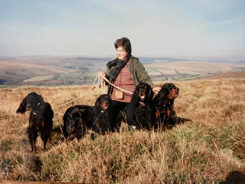 working gordon setters show dogs