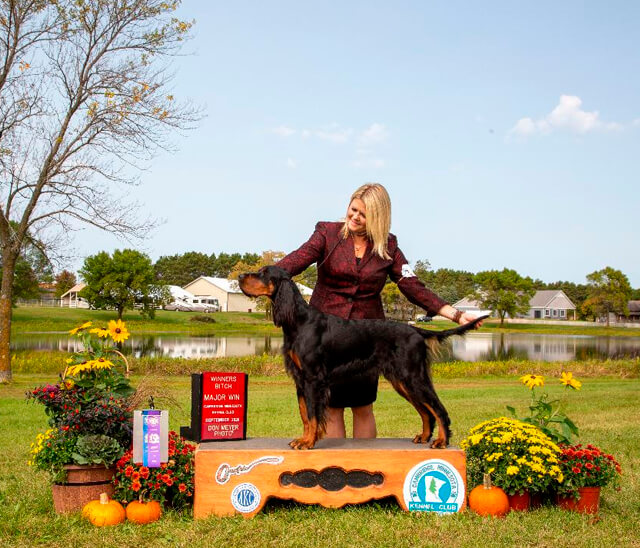 Gordon Setter dog breeder website